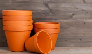 Jardin en hiver - Les pots