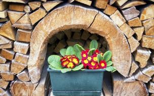 Jardinière et stock de bois