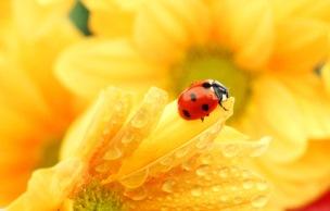 Protéger ses fleurs des champignons