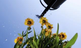 Nos conseils pour l'arrosage du jardin en été