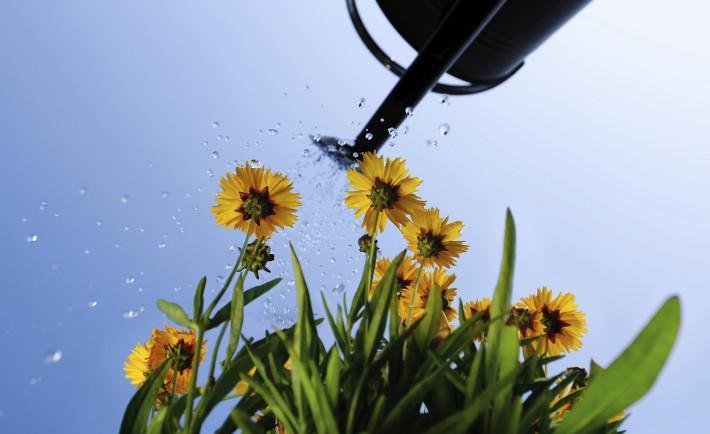 Tous nos conseils sur l 39 arrosage du jardin en t for Arrosage du jardin