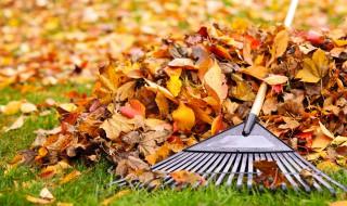 Nos conseils pour jardiner en automne