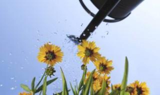 Nos conseils pour l'arrosage du jardin
