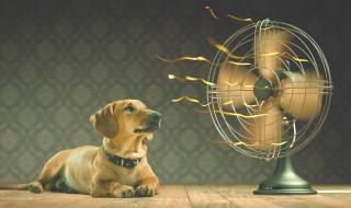 Ventilateur chien canicule fraîcheur
