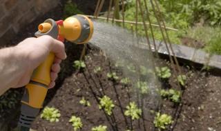 arrosage culture salade potager jardin jardinage pommeau tuyau pistolet