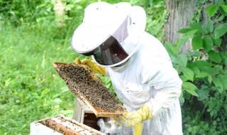 Apiculteur équipement de sécurité en pleine récolte de son miel