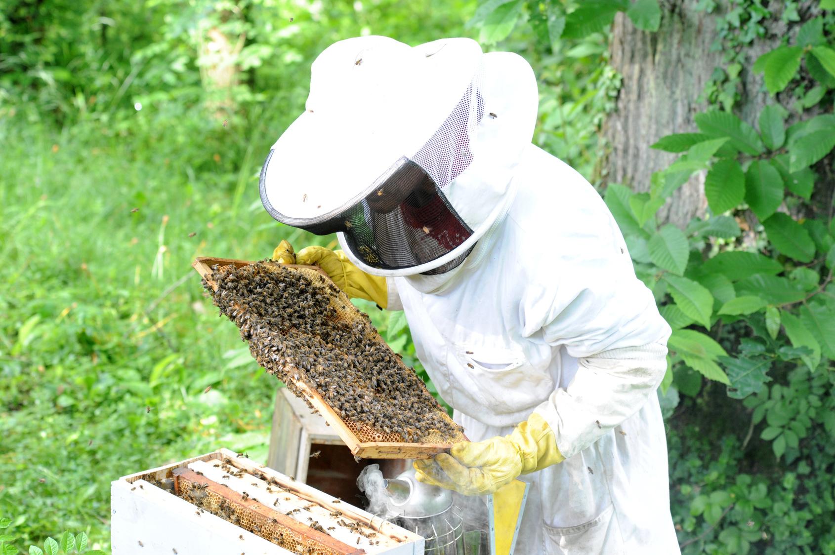apiculteur quipement de s curit en pleine r colte de son miel le blog de mon magasin g n ral. Black Bedroom Furniture Sets. Home Design Ideas