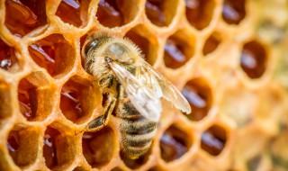Comment installer une ruche chez soi ?