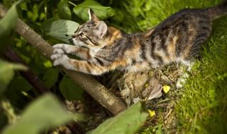 Comment éloigner les chats de son jardin ?