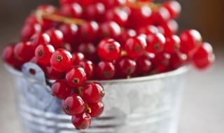 Groseille, un fruit pour une confiture d'été