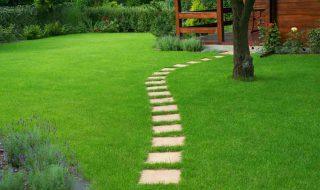Comment faire une pelouse et l'entretenir ?