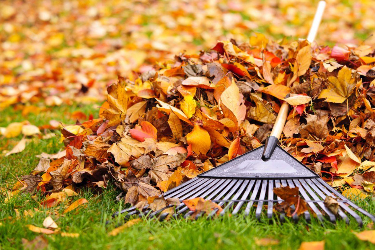 Jardiner en automne - Mon Magasin Général