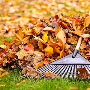 Comment jardiner en automne ?
