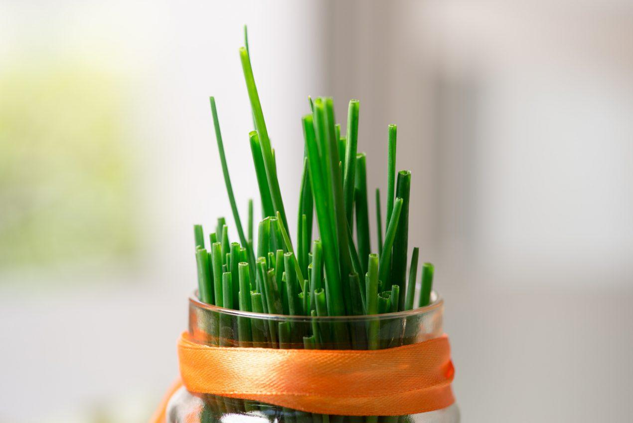 Comment cultiver des plantes aromatiques en intérieur ?