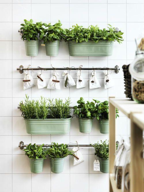 Quelle plantes aromatiques en intérieur ?