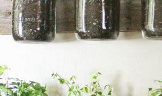 Plantes aromatiques en intérieur - horizontal