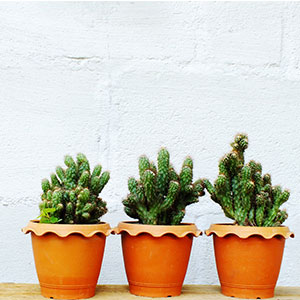 Coment décorer ses pots de fleur ?