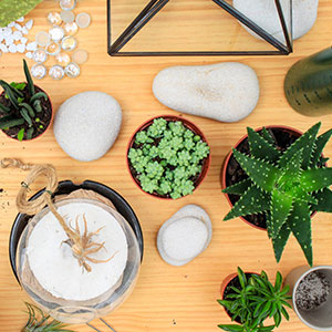 comment faire un terrarium le diy de mon magasin g n ral. Black Bedroom Furniture Sets. Home Design Ideas