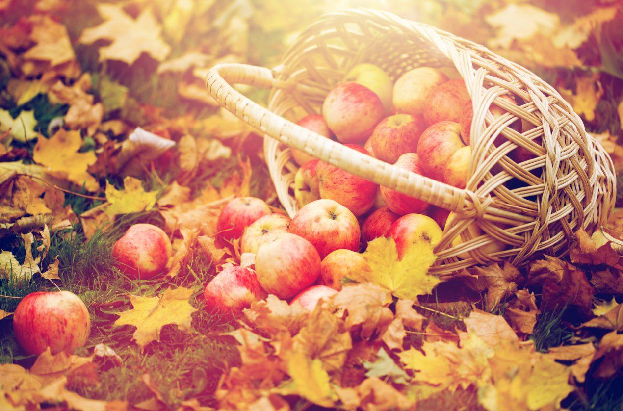 Apprendre à entretenir son jardin en automne avec Mon Magasin Général