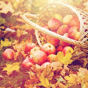 Comment entretenir son jardin en automne le blog de for Entretenir son jardin en avril