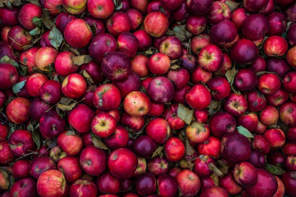 Quelles pommes pour faire du cidre ?