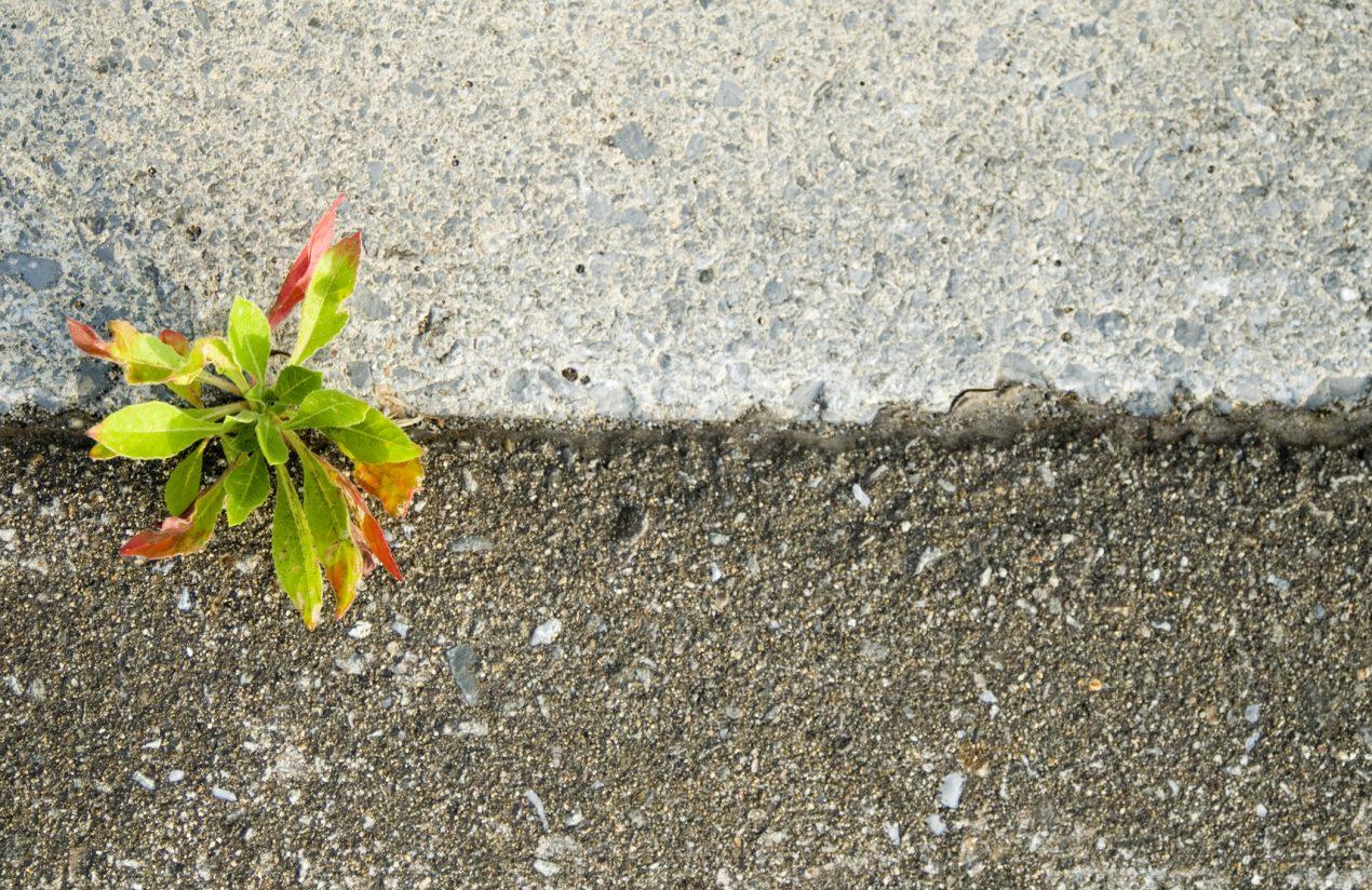 Utiliser un arrache-pissenlit pour éliminer les mauvaises herbes