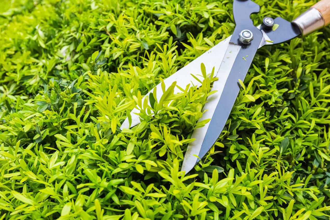 Quels outils de jardinage à main choisir ?