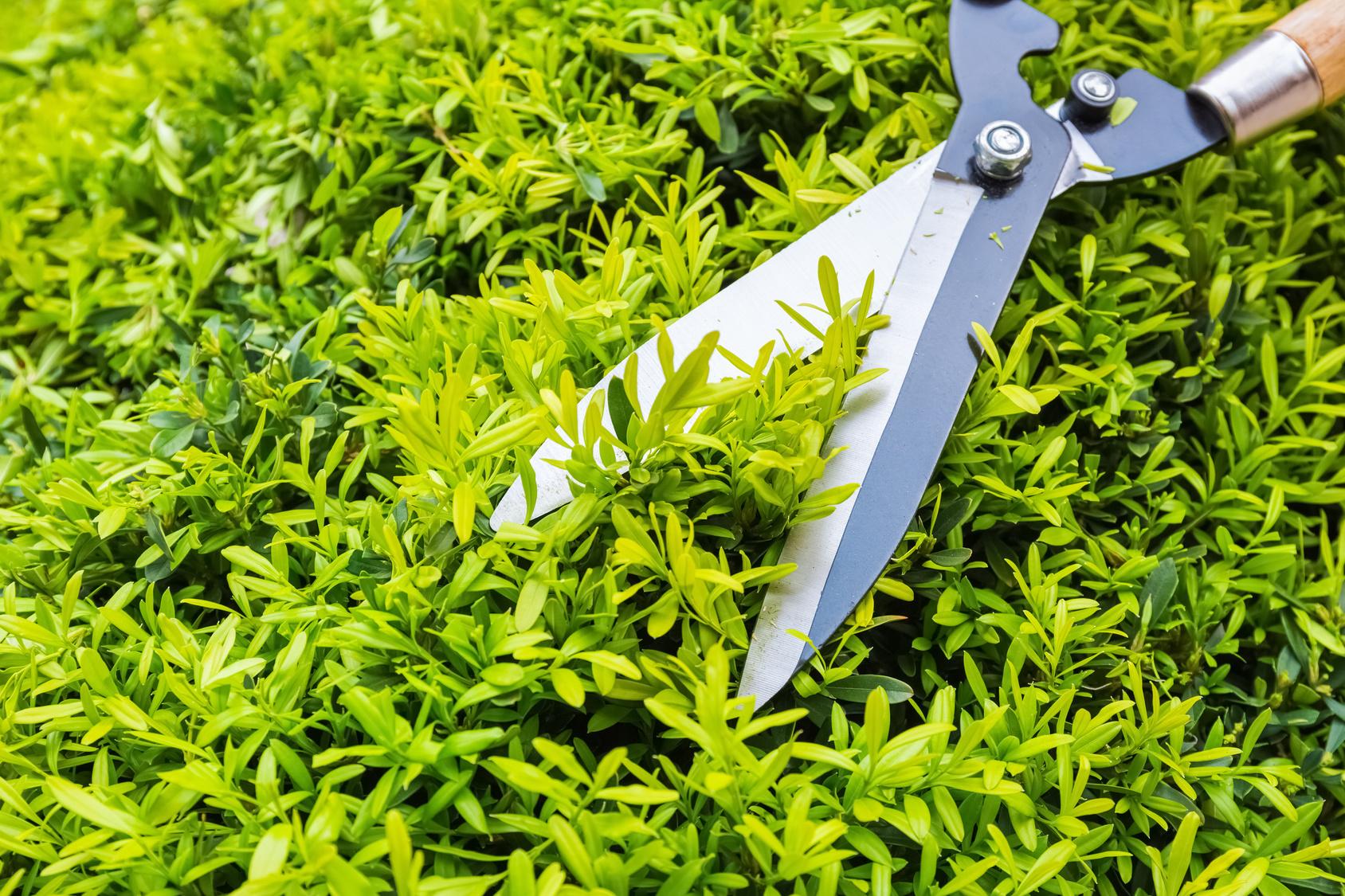 Comment faire un canap en palette le tuto diy for Site jardinage