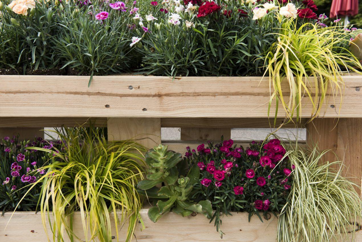 Faire un mur végétal en palette facilement