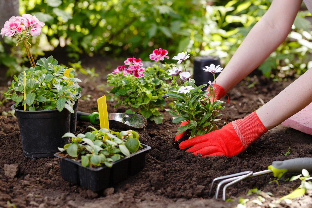 Retrouvez ici tout les conseils pour bien aménager son jardin