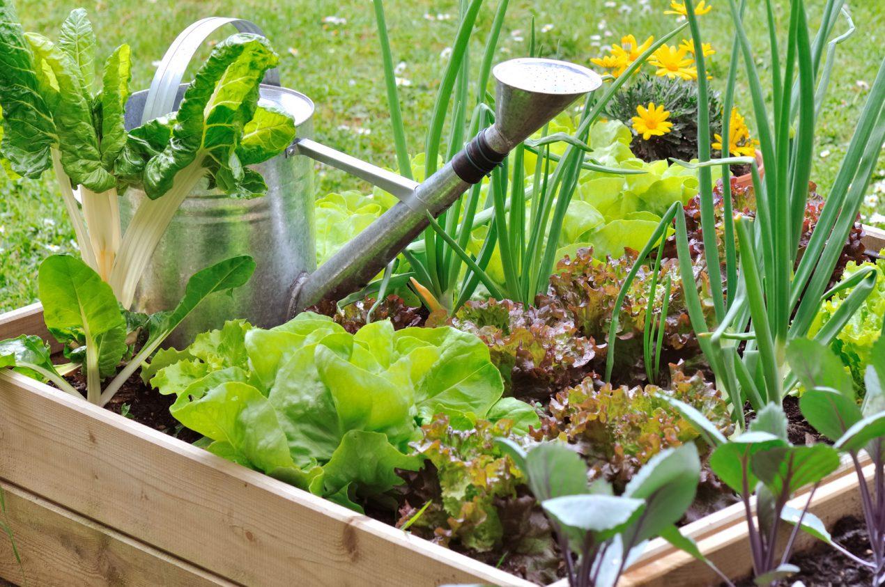 Planter Dans Une Caisse En Bois comment faire un potager dans des caisses à vin ? - le tuto