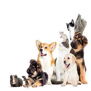 Quel matériel pour mon animal dois-je avoir ? Le guide de Mon Magasin Général