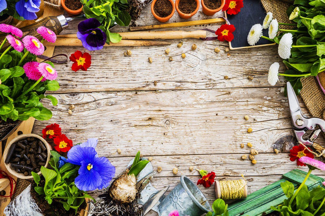 Comment faire un jardinage biologique ? Le Guide de Mon Magasin Général