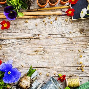 Comment faire un jardinage biologique ?