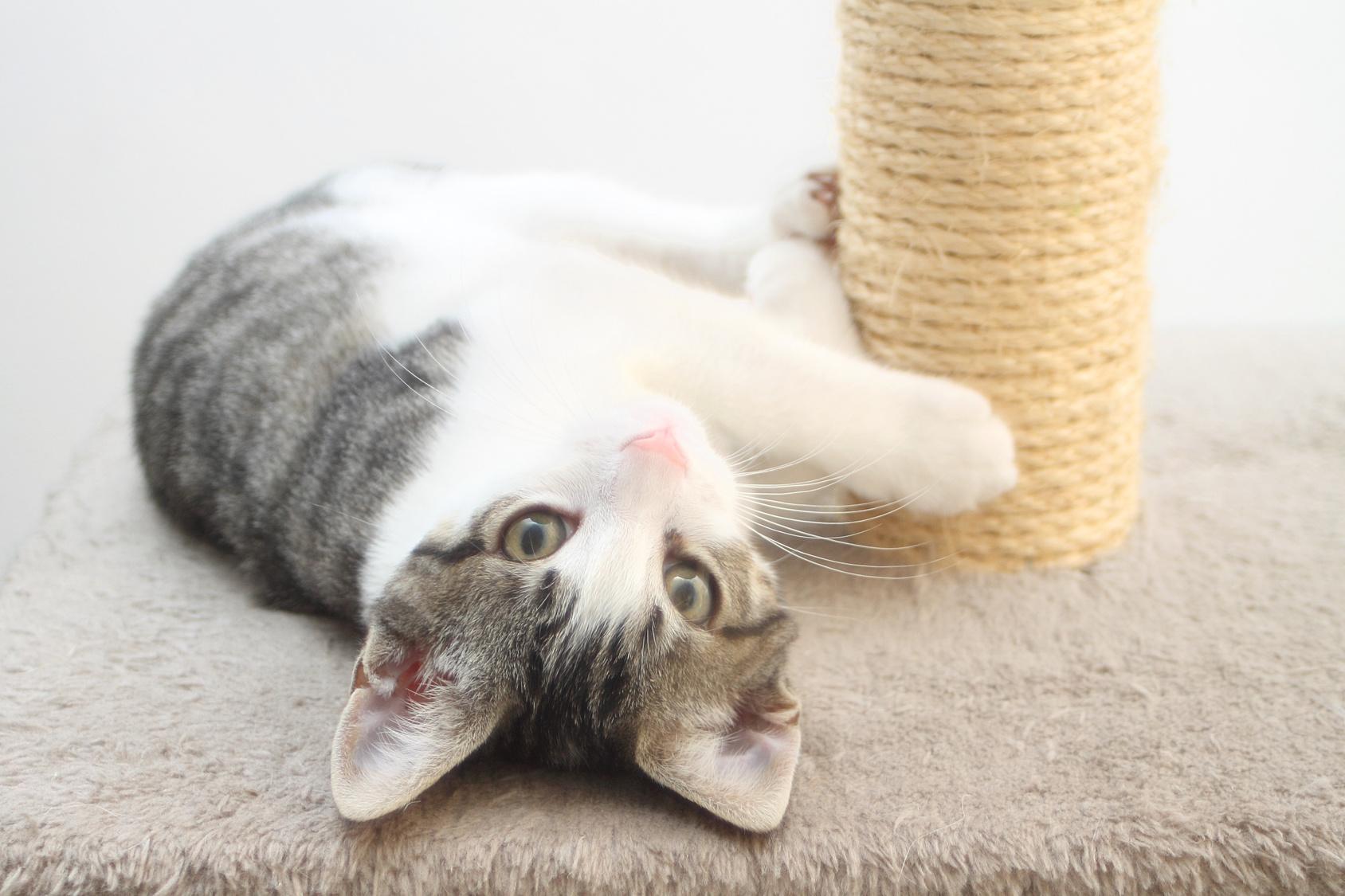 Comment fabriquer un arbre à chat ? Le Guide de Mon Magasin Général
