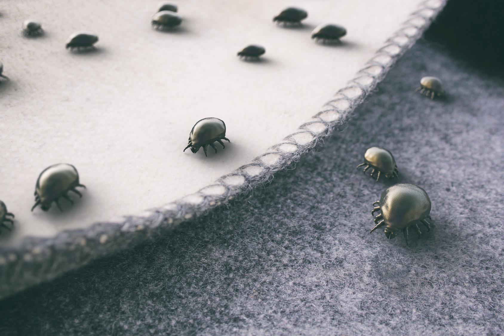 Comment lutter contre les mites ? Les conseils de Mon Magasin Général