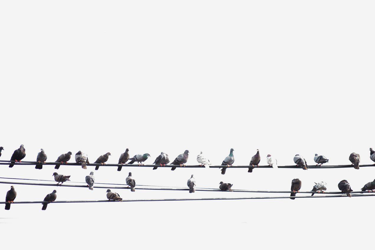 Comment faire fuir les oiseaux ? Le guide de Mon Magasin Général