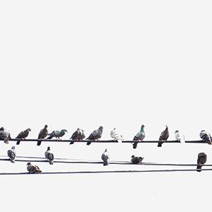 Comment faire fuir les oiseaux ? Les astuces de Mon Magasin Général