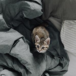 Comment fabriquer un griffoir pour chat ?