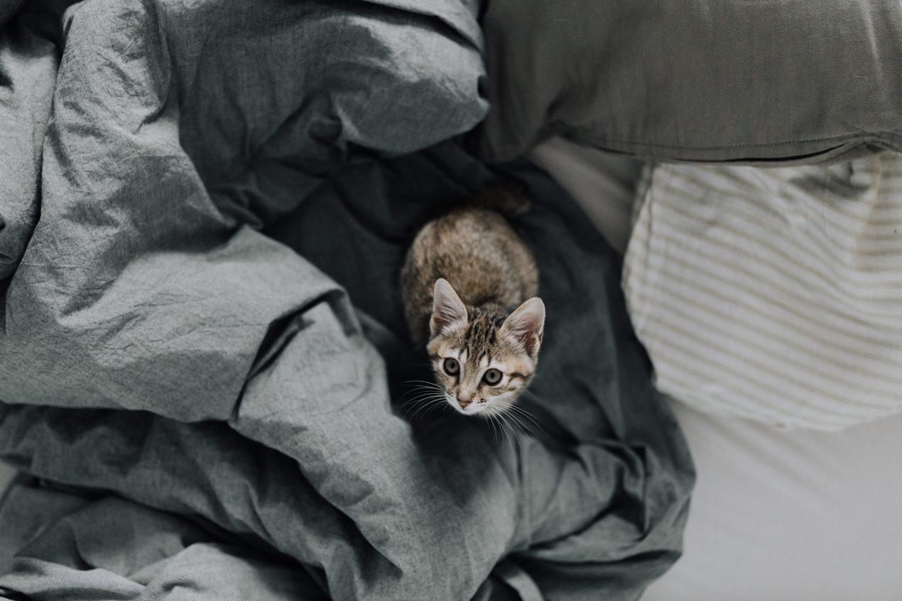 Découvrez comment fabriquer un griffoir pour chat