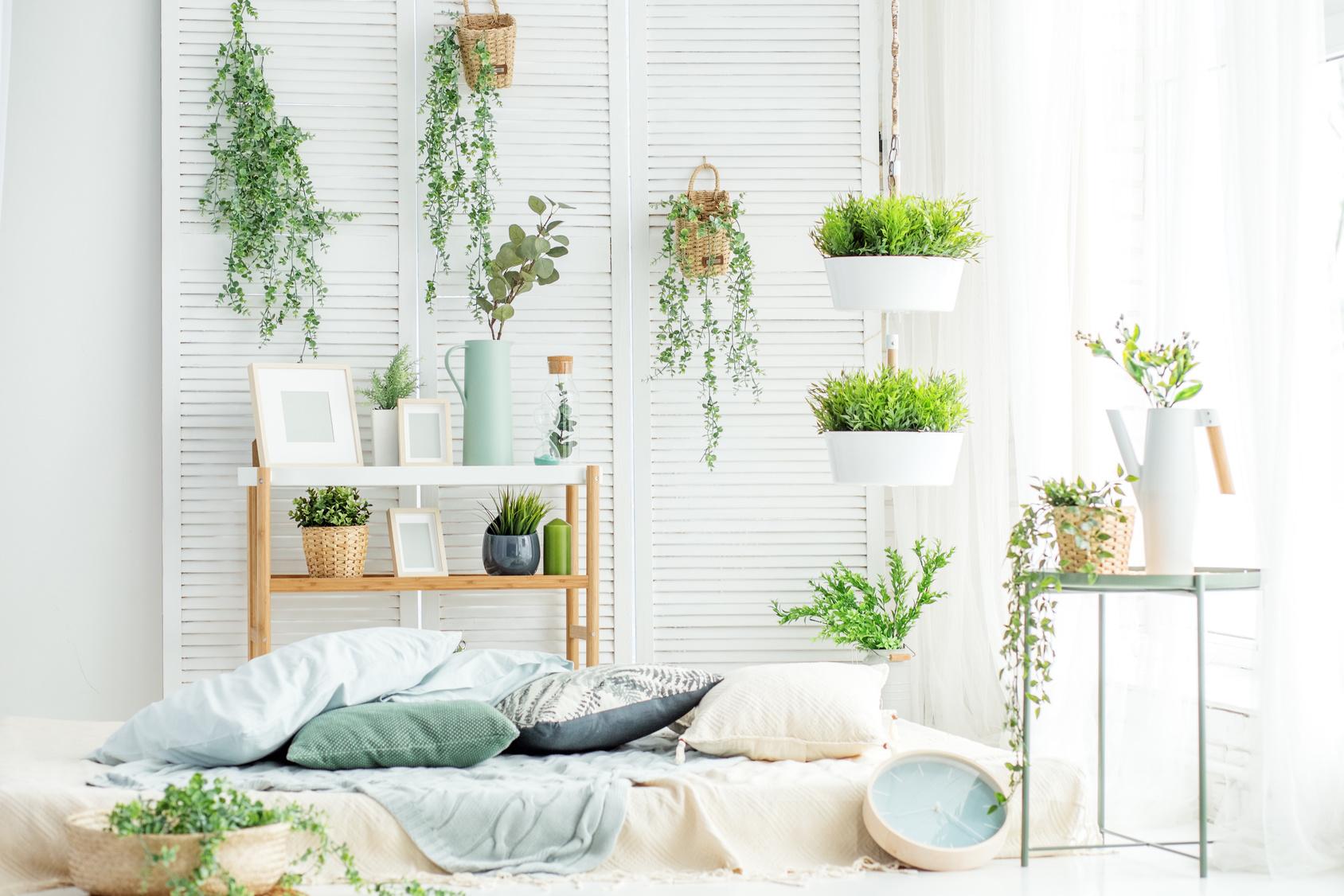 Large Indoor House Trees: Comment Faire Un Canapé En Palette ? Le Tuto DIY