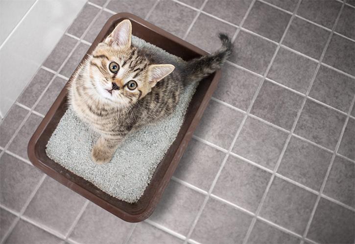 Fabriquer-un-meuble-cache-litiere-pour-son-chat-avec-Mon-Magasin-Général
