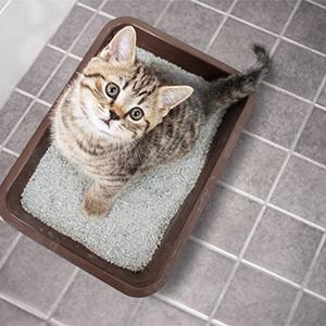 Comment fabriquer un meuble cache litière pour son chat ?